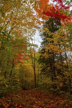 Fall in the Canadian East [OC][34565184] #reddit