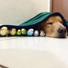 A Dog, A Hamster And 8 Birds Make The Most Adorable Friendship Ever