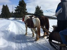 Horses and snow