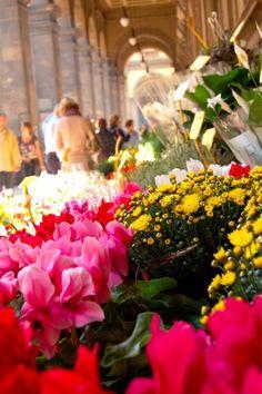 flower-market-florence-italy