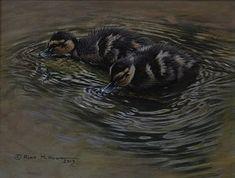 Mallard Ducklings - Acrylic - 11 x Framed - - Original British Bird Paintings For Sale - Alan M Hunt Bird Paintings, Paintings For Sale, Photorealism, Mallard, Wildlife Art, Bird Prints, Pyrography, Bird Art, Natural World