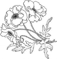 Poppies Flower