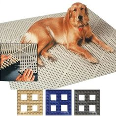 126 Best Kennel Ideas Images In 2019 Dog Cat Pets Doggies
