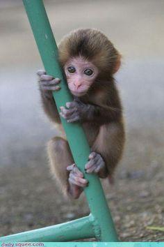 Awww!!!  Cute baby monkey   <3