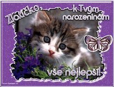 Happy Birthday Quotes, Cute Cats, Free, Animals, Friends, Pretty Cats, Amigos, Happy Birthday Captions, Animales