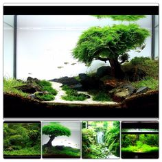 Aquascapes!