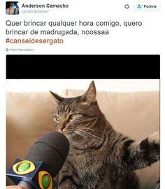 18 reclamações engraçadíssimas do gato que conquistou a internet