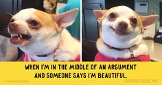 15dogs whose facial expressions are downright hilarious