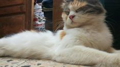 Adorable Mother Cat Get Relaxed After Long Day With Pregnancy Cat Work, Mother Cat, Long Day, Pregnancy, Ainsi, Cats, All About Cats, Animaux, Environment