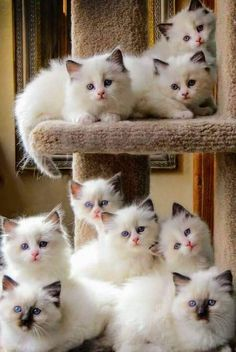 """cuteandadorable: """"Cuteness overload!😚🐺😚🐺😚🐺 """""""