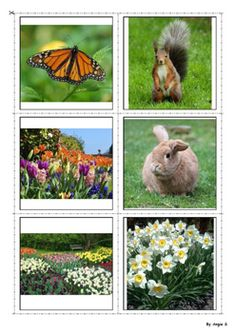 #Spring Vocabulary Photo Flash Cards, for more resources follow https://www.pinterest.com/angelajuvic/autism-special-education-resources-angie-s-tpt-sto/