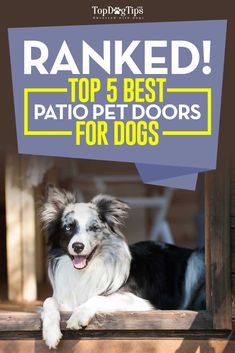 Patio pacific endura flap pet door for walls dog doors dog doors top 5 best patio pet door for dogs convenient for owners and pets dog planetlyrics Images