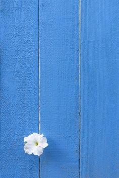 wallpaper para celular | minimalista