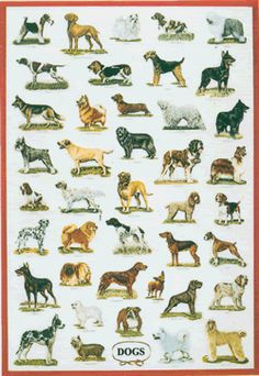 poster_dogs