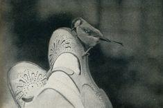 #lenhoward — wyszukiwanie Twittera / Twitter On Shoes, Dress Shoes, Vintage Polaroid, Jolie Photo, Pretty And Cute, Aesthetic Photo, Vintage Photography, Blue Bird, Vintage Photos