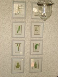 framed fern prints | we framed these antique fern prints: stained the stairwell, wallpaper ...