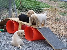 jungle gym!! I can use this for my dog and bunnies!