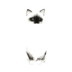 Angora Siamese Cat - Chat Siamois Angora Art Print