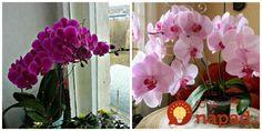 Moja kamarátka ma upodozrieva, že moja orchidea kvitne už tak dlho, že musí byť umelá! House Plants, Diy And Crafts, Floral Wreath, Home And Garden, Wreaths, Home Decor, Gardening, Flowers, Cactus