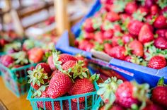Start a strawberry farm for U-pick, for sale and for your own delicious strawberries.