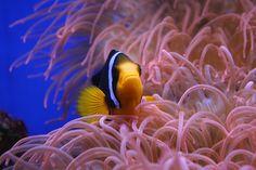 361 best salt water tank images on pinterest marine life