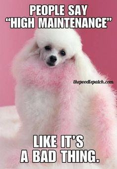 PEOPLE SAY HIGH MAINTENANCE LIKE ITS A BAD THING #poodles