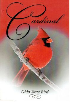 Postcrossing US-2005849 - Cardinal - Ohio State Bird.  Card sent by Postcrosser in that state in the United States.