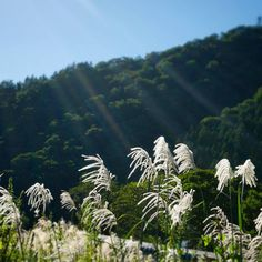 Catching some of that September sun in the Japanese Alps.  #sunrays #japan #japanesealps #countryside #grass #nature #naturelover #travelgram #travelphotography #igtravel #explore #wander #nofiltertravel