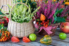 Herbstpflanzen Kübel ~ Der erste bodenfrost so schützen sie den garten im herbst wetter. Rogel raumbegrünung. Bodendeckerrosen pflanzen und schneiden tipps. Hebe mix green boys garten selbstgemacht...