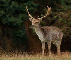 Parque de la naturaleza de Cabárceno #Cantabria #Spain Especie Animal, Kangaroo, Nature, Woods, Parks, Pets, Naturaleza, Animales, Life