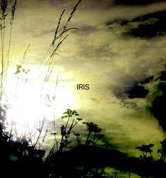 ©Winter Sun Reflections photography by Iris Sun  www.irisunart.com