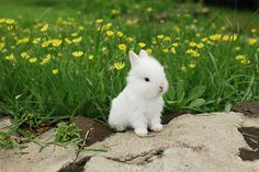 Bunny by the daisies ~ The Enchanted Cove