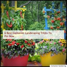 Container Landscaping Ideas, Container Landscaping Back Yard Ideas, Container Gardening Tips, Container Landscaping Design