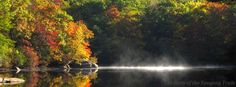 Foliage at Hidden Lake on the White Trail at Camp #Yawgoog.  A 2014 image by David R. Brierley.