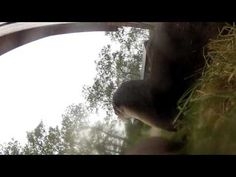 River Otters steal my GoPro