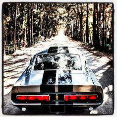 Ford Shelby GT 500 - Gorgeous car, and also my dream car!