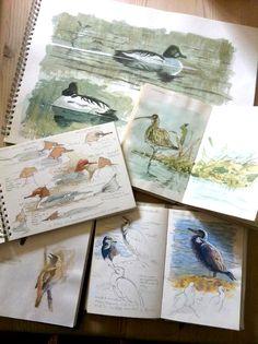 Sketch books of birds