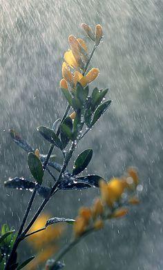 Ich hab gestern Regenbilder übrig gelassen… by Manuela Salzinger
