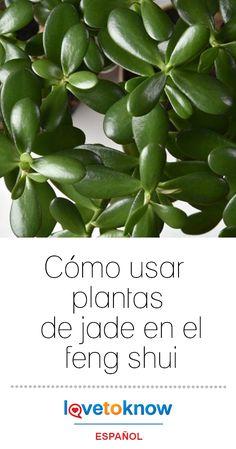 Growing Herbs Indoors, Growing Plants, Garden Boxes, Herb Garden, Easy Herbs To Grow, Seed Shop, Jade Plants, Plant Markers, Herb Seeds