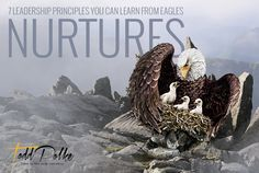 Eagles nurture their young for as long as 5 months.