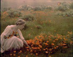 "Arnold Genthe, Helen MacGowan Cooke picking California golden poppies in a field.""1906"