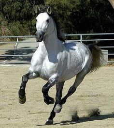 Love this color! Beautiful horse!