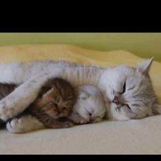 Esta gata sabe. #colecho #natural #amor