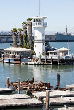 Pier 39, sea lions, san franciscoFor TIB collectionEdited by Sabine...
