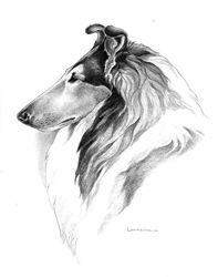 Google резултати слика за http://www.tarawoodcollies.com/images/perfect_collie_drawing_sm.jpg