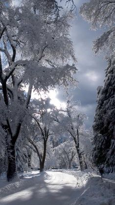 Nature sous la neige // Nature under the snow Winter Szenen, Winter Love, Winter Magic, Winter Christmas, Winter Walk, Winter Light, Winter Season, Winter Photography, Nature Photography