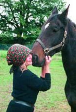 Horses   Fondation Brigitte Bardot Please support Brigitte Bardot in her welfare campaign for horses in Europe: http://www.fondationbrigittebardot.fr/s-informer/chevaux