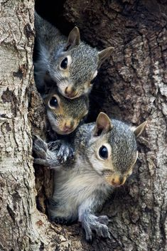"beauty-rendezvous: "" A Squirrels Family Tree (by G. H. Holt Photography) """