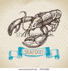 Vintage sea background. Hand drawn sketch seafood vector illustration of lobster