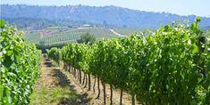 Casablanca Valley Wine Tour